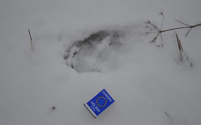 Varg gick genom isen drunknade